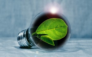 light-bulb-2631864_1920